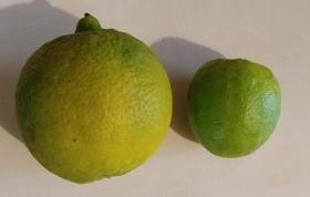 Lime comparison