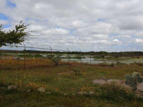 Wetland at Cañada de la Virgen. Photo by Angela Grier