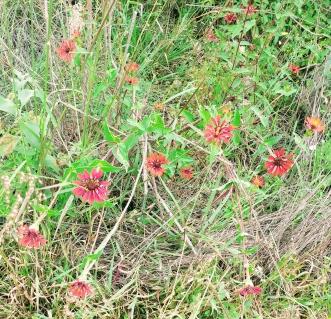 Wildflowers at Cañada de la Virgen. Photo by Angela Grier