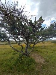 Cactus at Cañada de la Virgen. Photo by Angela Grier