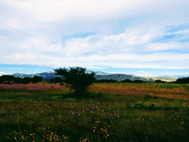 Scenery on the drive home from Dolores Hidalgo to Leon