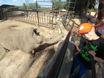 Rhino at Leon Zoo