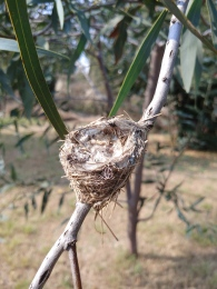 Walking past a hummingbird nest. Photo by Angela Grier