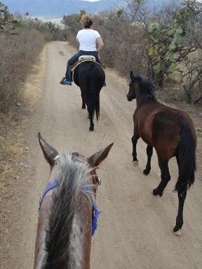 Horseback riding at Echological. Photo by Angela Grier