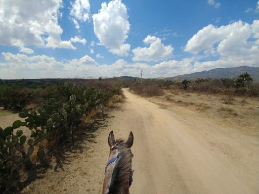 Horseback riding at Echological. Photo by Angela Grier