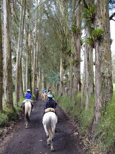Trail riding with Hacienda la Alegria. Photo by Angela Grier