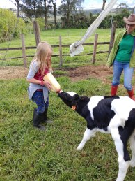 Bottle feeding calves. Photo by Angela Grier